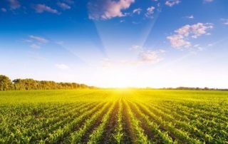 The Corn Carpet Report Card