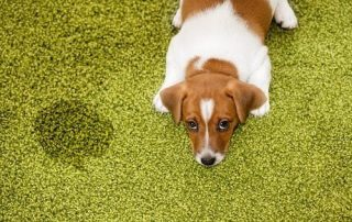 Preventing Pet Damage on Your Carpets